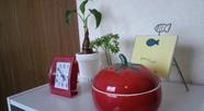 雑貨とか植物たち