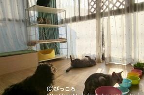 お猫様達のお部屋
