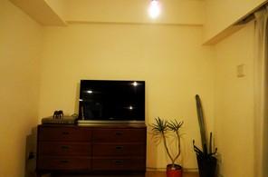 テレビとサボテン