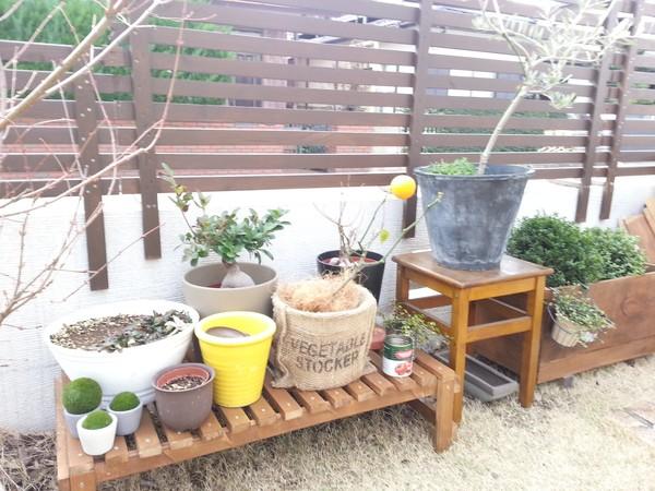 DIY!花台&リンゴの木箱の再利用!