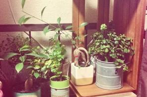 私の部屋4