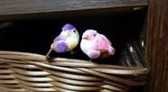 籠の隅に、2羽