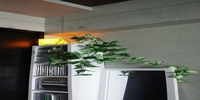 LED CANDLE LIGHT ココロ
