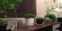 東側窓際 モコモコ系植物、他