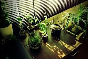当時の観葉植物たち