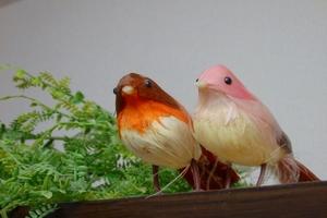 棚の隅に、2羽